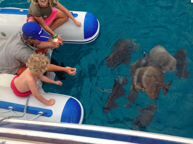 feeding fish from dinghy